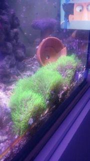 RESERVIERT korallen zum verschenken