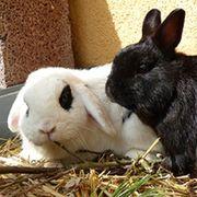 LOLA & BILBO suchen