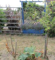 Pacht-Garten abzugeben Sparte Am Nußberg
