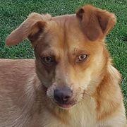 Grüner feiner Junghund sucht aktive