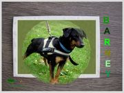 Pflegehund BARNEY sucht
