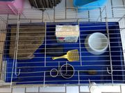 Hasenstall / Meerschweinchen Stall