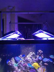 1 x Aquariumlampen