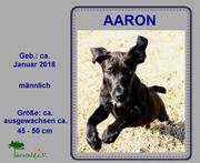 Aaron* verspielter Welpe
