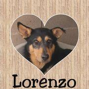 LORENZO - Rohdiamant möchte