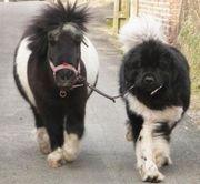 Stallhilfe für Pferdebetreuung