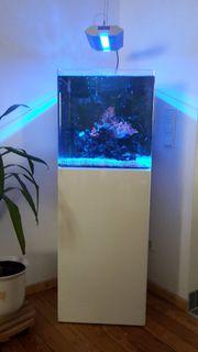 Hochwertiges Meerwasseraqarium Blau