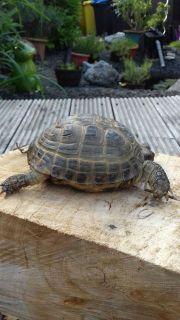 Schildkröte seit 22.