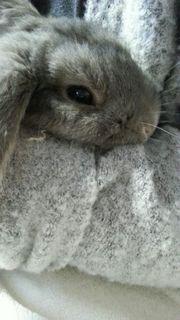 Kaninchen in gute Hände