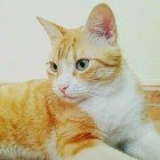 Tom (I) - nur