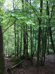 Waldgrundstück zu verkaufen