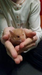Noch 2 hamsterbabys