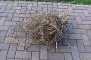 Korkenzieher Haselnuss Zweige