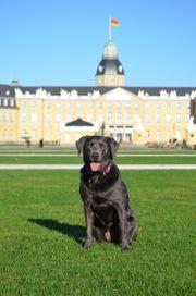 Trainingsgelände für Hundeschule