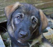 Lorena hübsches Hundewelpchen sucht IHRE