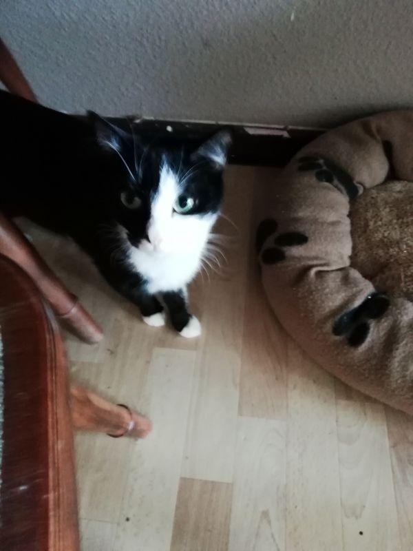 Katzen - Erfurt - Sonstige KatzenjungIch muss mich leider Gottes aus gesundheitlichen Gründen meine beiden Katzen abgeben. Ich hatte letztes Jahr einen schweren Herzinfarkt und muss dieses Jahr noch mehrmals ins Krankenhaus. Bei weiteren Fragen stehe ich gerne zu - Erfurt