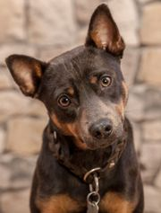 Terrier, 4 Jahre