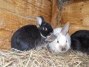 Kaninchenjungs