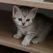 Whiskas Katzenbabys
