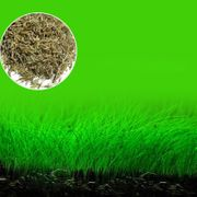 Biete Samen für Aquarien an
