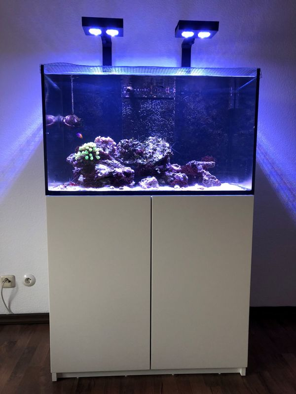 aquaristik in starnberg bei deinetierwelt. Black Bedroom Furniture Sets. Home Design Ideas