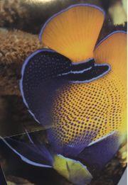 suche Meewasserfische Kaiser