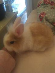 noch ein kaninchen baby ist