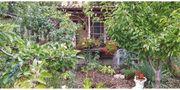 gepflegter Garten zu verkaufen