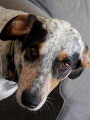 Mischlingshund MEDANI aus