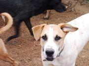 Rufus - toller Junghund sucht seine