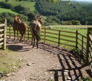 Aufbau Paddock Trail