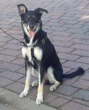 Traumhund Mex sucht liebevolles Zuhause