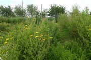 Suche Grundstück, Gartenland -
