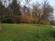 Gartengrundstück Streuobstwiese