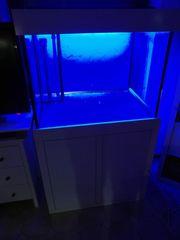Meerwasseraquarium 400 L Sonderanfertigung Giesemann