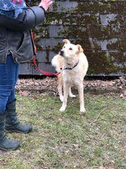 Hund weiblich Mischling 3 Jahre