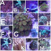 Korallen Und Anemonen 5-20EUR