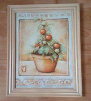 Bild Tomatenstock Terracotta