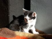 Junge Katze mit