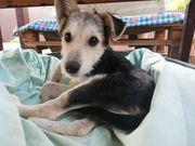 Hundekind Mara sucht ein liebevolles