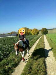 hübsche Paint-Horse-