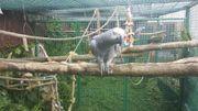 Nehme Papageien, Sittiche