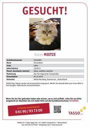 Katze Vermisst in Südstadt Nürnberg
