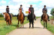 Reiterferien Pfingsten und Sommer noch