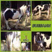 Suesann - entspannte Tinker-