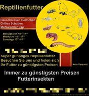 Frostfutter Heuschrecken Mehlwürmer Heimchen Grillen