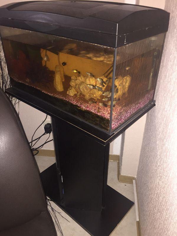 Fische f r mini aquarium gebraucht kaufen nur 3 st bis for Aquarium gebraucht