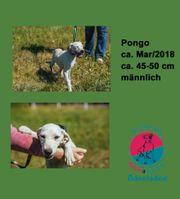 Pongo magst du mich adoptieren