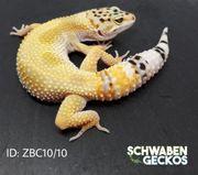 Leopardgecko Super Hypo