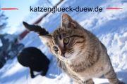Urlaubsbetreuung Tierbetreuung Katzenbetreuung Katzensitting mit